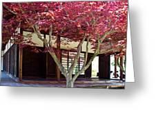 Tea House Thru The Maple Greeting Card by Tom Gari Gallery-Three-Photography