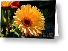 Tears For Daisy Greeting Card by Nava Thompson