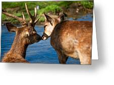 Tender Kiss. Deer In The Pamplemousse Botanical Garden. Mauritius Greeting Card by Jenny Rainbow