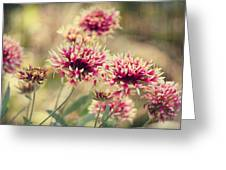 Tender Pink Blooms Greeting Card by Melanie Lankford Photography