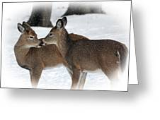 Tender Sentiment Greeting Card by Christina Rollo