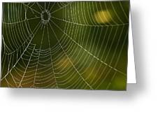 Tender Web Greeting Card by Christina Rollo