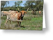 Texas Longhorns Greeting Card by Christine Till
