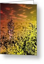 Texas Yucca Flower Greeting Card by Bartz Johnson