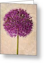 Textured Allium Greeting Card by John Edwards