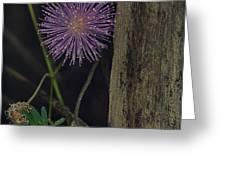 Thailand  Purple Wild Flowers Greeting Card by David Longstreath