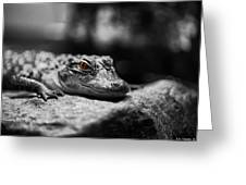 The Alligator's Eying You Greeting Card by Linda Leeming