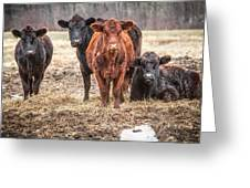 The Angry Cows Greeting Card by Gary Heller