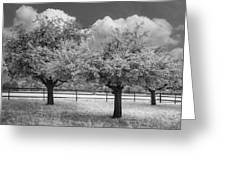 The Apple Orchard Greeting Card by Debra and Dave Vanderlaan