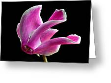 The Art Of Cyclamen Greeting Card by Terence Davis