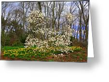 The Beauty Of Spring Greeting Card by Photographic Art and Design by Dora Sofia Caputo