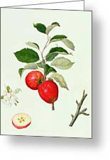 The Belle Scarlet Apple Greeting Card by Barbara Cotton