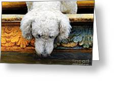 The Big Water Bowl Greeting Card by Judy Wood