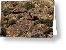 The Bighorn Uwe Greeting Card by Robert Bales