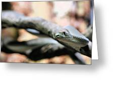 The Black Mamba Greeting Card by JC Findley