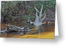 The Black Water River Greeting Card by JC Findley