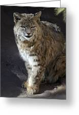 The Bobcat Greeting Card by Saija  Lehtonen