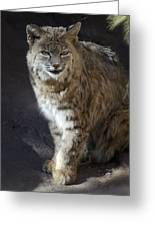 The Bobcat Greeting Card by Saija  Lehtonen