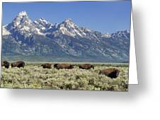The Boys Club Of Grand Teton Greeting Card by Sandra Bronstein
