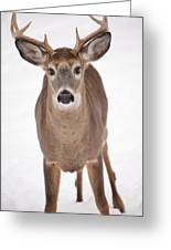The Buck Stops Here Greeting Card by Karol  Livote