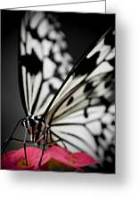 The Butterfly Emerges Greeting Card by Jen Baptist