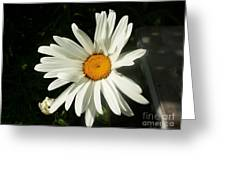 The Camomile Greeting Card by Evgeny Pisarev