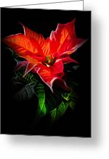 The Christmas Flower - Poinsettia Greeting Card by Gynt