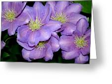 The Clematis Gang Greeting Card by Sarah OToole