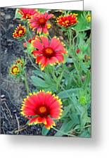 The Color Of Summer Greeting Card by Merv Scoble
