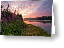 The Color Purple Greeting Card by Davorin Mance
