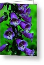 The Color Purple Greeting Card by Kathleen Struckle