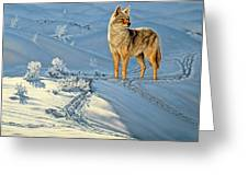 the Coyote - God's Dog Greeting Card by Paul Krapf