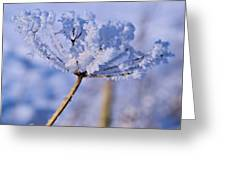 The Crystal Flower Greeting Card by Dave Woodbridge
