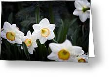 The Daffodil Bloom Greeting Card by Thanh Tran