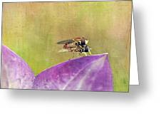 The Dance Of The Hoverfly Greeting Card by Cindi Ressler