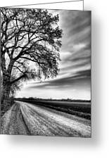 The Dirt Road In Black And White Greeting Card by JC Findley