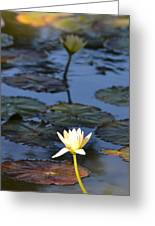 The Echo Of A Lotus Flower Greeting Card by Bill Mock
