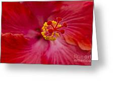 The Expression Of Love Greeting Card by Sharon Mau