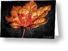 The Fallen Greeting Card by Mitch Shindelbower