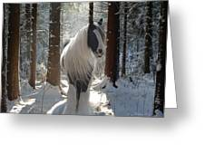 The Forest Beauty Greeting Card by Terry Kirkland Cook