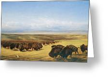 The Gathering Of The Herd Greeting Card by William Jacob Hays