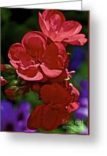 The Geraniums Greeting Card by Gwyn Newcombe