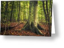 The Giving Tree Greeting Card by Scott Norris