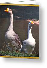 The Goose And The Gander Greeting Card by Patricia Keller