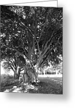 The Grandmother Tree Greeting Card by Sarah Egan
