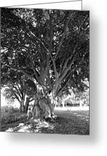 The Grandmother Tree Greeting Card by Sarah Egan