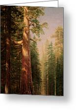 The Great Trees Mariposa Grove California Greeting Card by Albert Bierstadt
