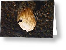 The Hive  Greeting Card by Shawn Marlow