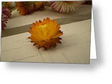 The holy flower Greeting Card by Fabian Cardon
