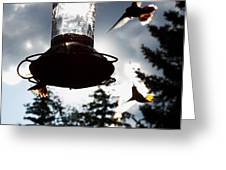 The Hummer's Dance Greeting Card by Cherie Haines